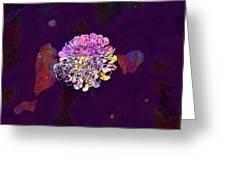 Deaf Skabiose Scabiosa Columbaria  Greeting Card