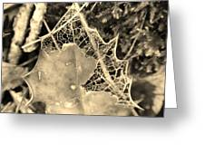 Decayed Lacing Greeting Card