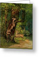 Deer In The Forest, 1868 Greeting Card