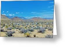 Desert Comfort Greeting Card