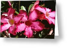 Desert Rose   Adenium Obesum Greeting Card