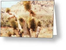Desert Yucca Greeting Card