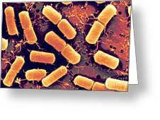Dividing Bacteria Greeting Card