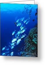 Diving Australia Greeting Card