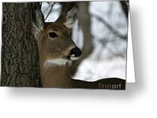 Doe Profile Greeting Card