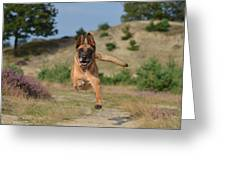 Dog Leaping Greeting Card
