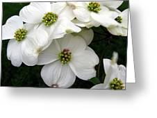 Dogwood Branch Greeting Card