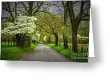 Dogwood Trail, Smoky Mountain, Tennessee Greeting Card