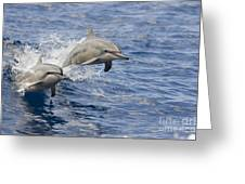 Dolphins Leaping Greeting Card by Dave Fleetham - Printscapes