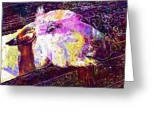 Donkey Livestock Beast Of Burden  Greeting Card