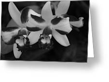 Double Orchid Greeting Card