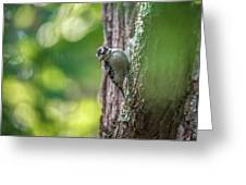 Downy Woodpecker In The Wild Greeting Card