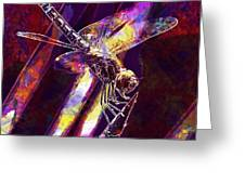 Dragonfly Insect Close  Greeting Card