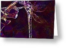Dragonfly Insect Winged Insect  Greeting Card