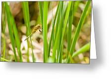 Dragonfly On Reed Leaf Greeting Card
