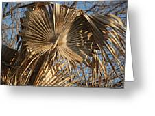 Dried Palm Fronds Greeting Card