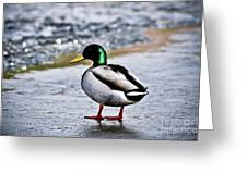 Duck On Ice Greeting Card