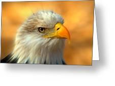 Eagle 10 Greeting Card