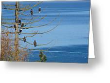 Eagle Tree By The Salish Sea Greeting Card