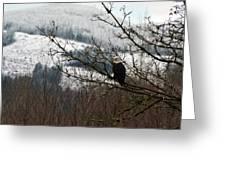 Eagle Watching Greeting Card