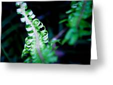 Early Fern Greeting Card