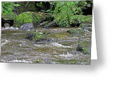 East Lyn River  Greeting Card