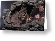Eastern Chipmunk In Tree Greeting Card