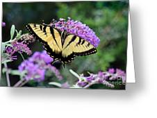 Eastern Tiger Swallowtail Butterfly 2015 Greeting Card