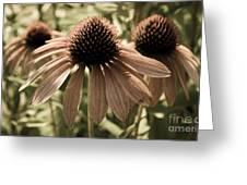 Echinacea Garden Greeting Card