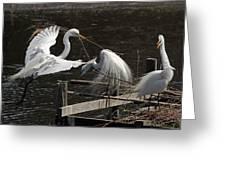 Egret 43 Greeting Card