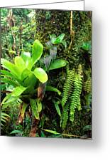 El Yunque National Forest Greeting Card
