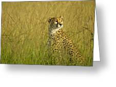 Elegant Cheetah Greeting Card