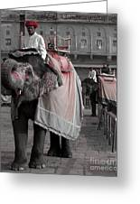Elephant At Amber Fort Greeting Card