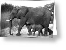 Elephant Walk Black And White  Greeting Card