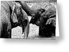 Elephants At Play Greeting Card
