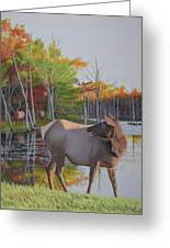 Elk Country Evening Greeting Card