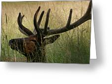 Resting Elk Greeting Card