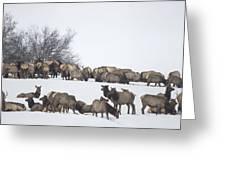 Elk Herd In The Snow Greeting Card