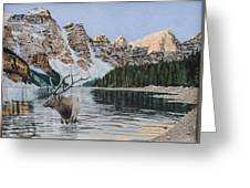 Elk In Moraine Lake Greeting Card