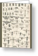 Entomology Greeting Card