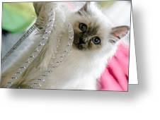 Ernie The Birman Kitty Greeting Card