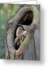 Eurasian Eagle-owl Bubo Bubo Looking Greeting Card by Rob Reijnen