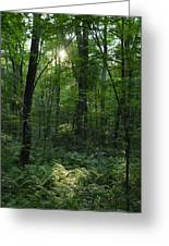 Evening Woods Greeting Card
