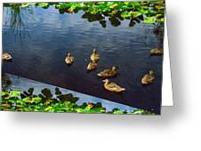 Exotic Birds Of America Ducks In A Pond Greeting Card