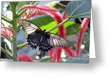 Exotic Butterflies At Rhs Wisley Surrey Uk Greeting Card