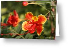 Exotic Story Greeting Card
