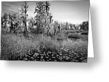 Faces Of The Swamp, No. 7 Greeting Card