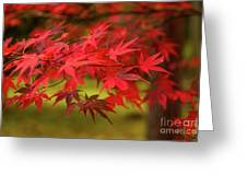 Fall Color Maple Leaves At The Forest In Aomori, Japan Greeting Card