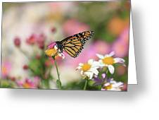 Fall Colors With Monarch Greeting Card