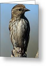 Female House Finch Greeting Card